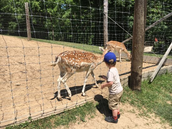 brantford twin valley zoo review