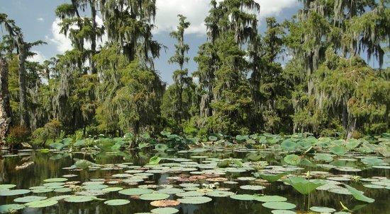 cajun country swamp tours reviews